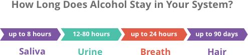 How long is alcohol detectable in your system?