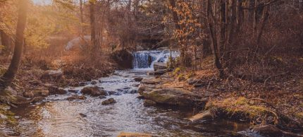 Flowing creek in the woods in Allentown, Pennsylvania
