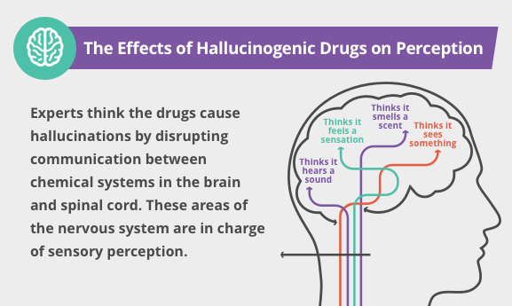 Hallucinogen Effects Short And Long Term Side Effects